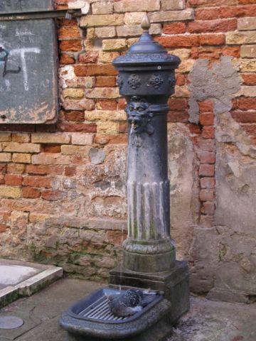 Venice Pigeon's bath
