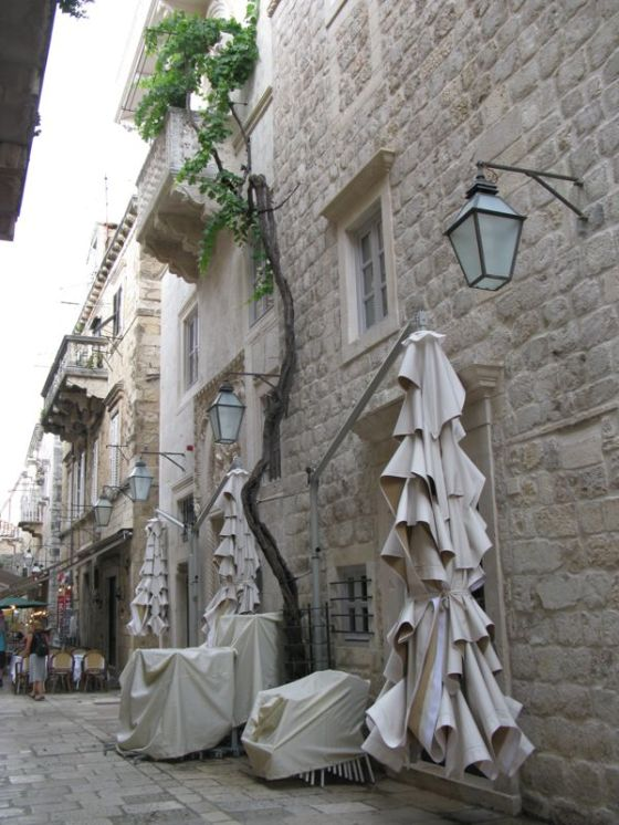 Dubrovnik_climbing tree