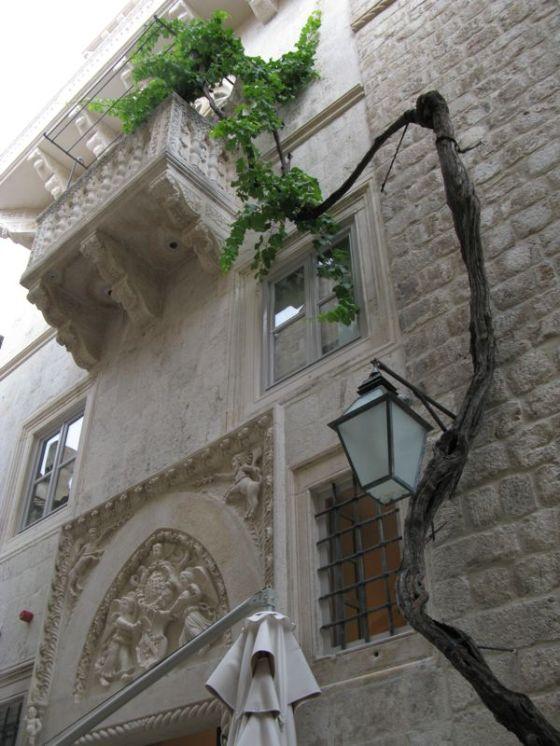 Dubrovnik_climbing tree2