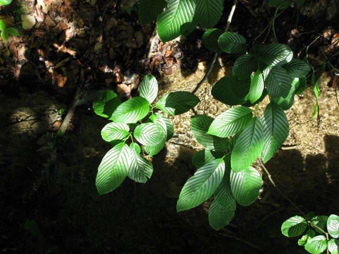 Plitvice10f_leaves