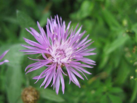 Plitvice6e_flower1
