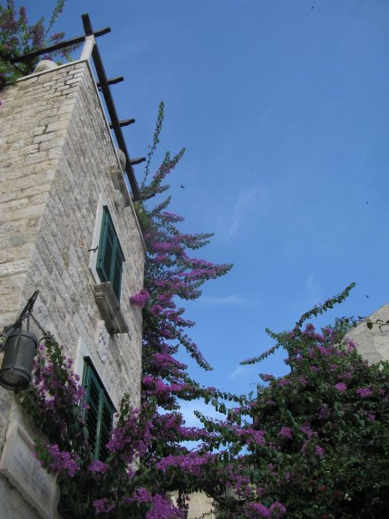 Split House with Bouginvillia