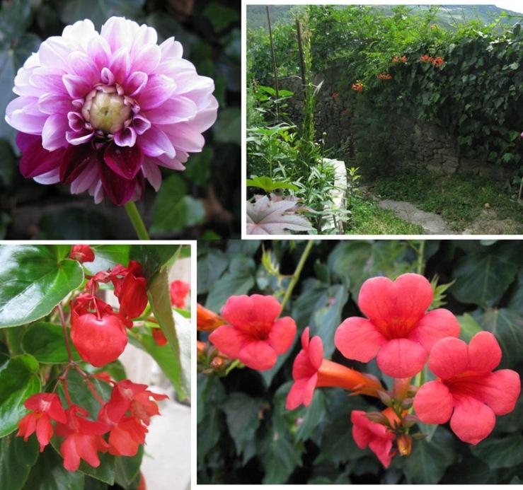 Buzet1a3_flowers