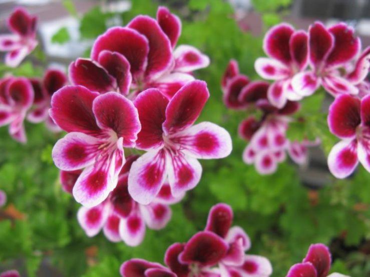 Buzet3h_flower