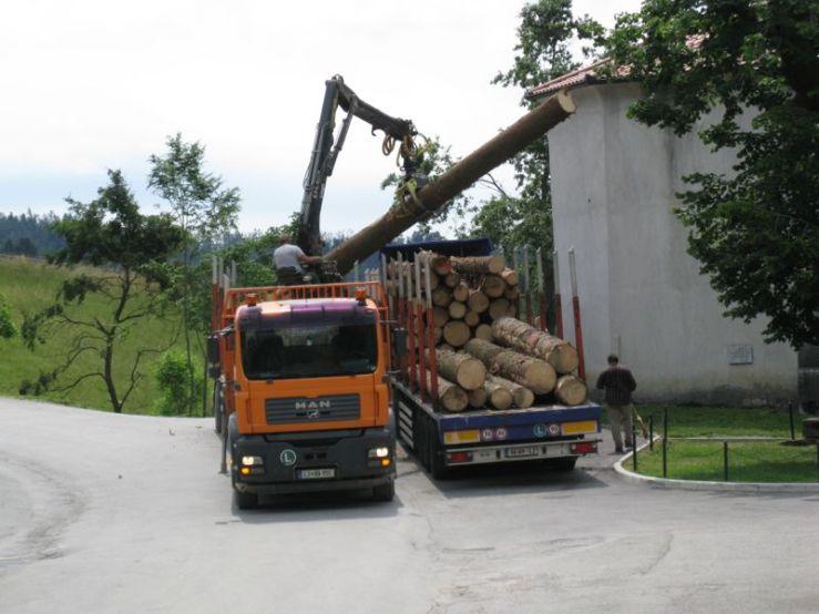 Slovenia_10 harvesting logs