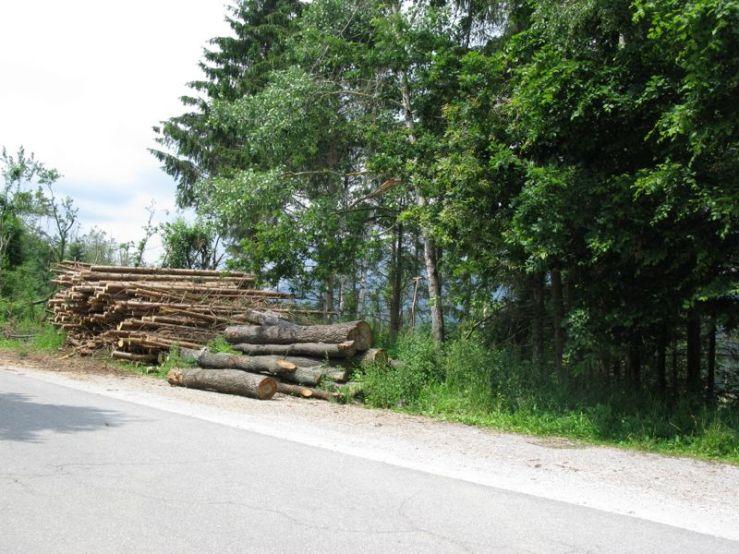 Slovenia_10a harvesting logs