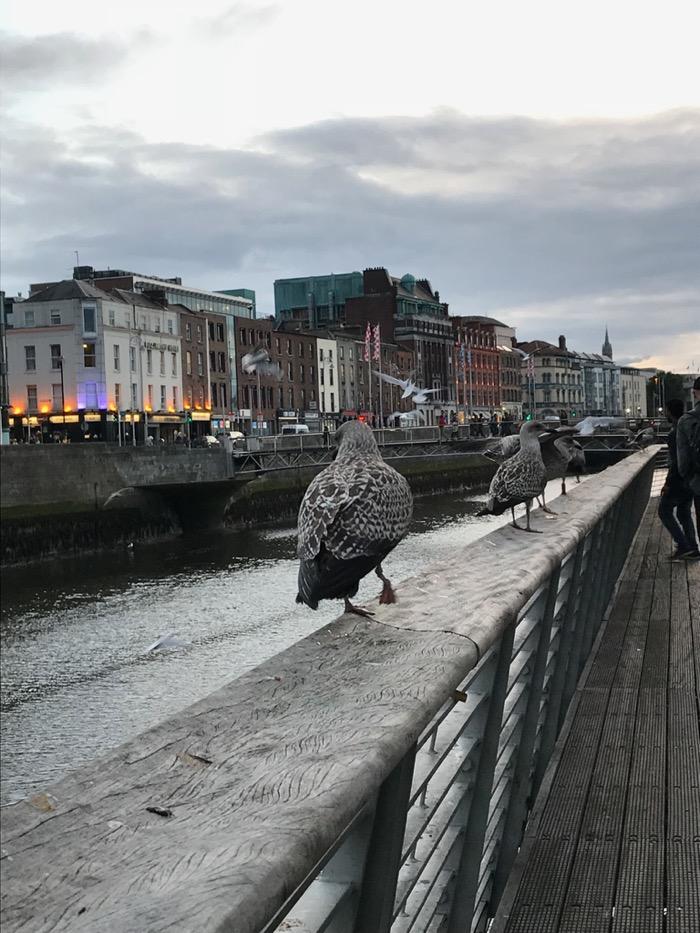 HaPenny Bridge_gulls.jpg
