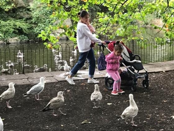 StStephensGreen Gulls.jpg